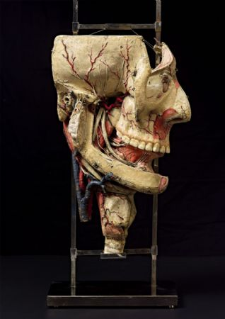 19th c. Detachable anatomical  head model  in paper-mâché.
