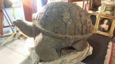 tartaruga in pietra