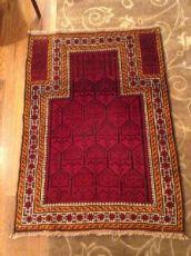 42966 beluci raro esemplare a preghiera