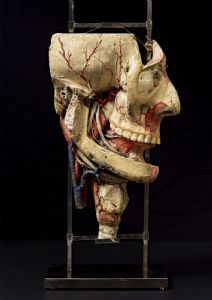 19th c. Detachable anatomical  head model  in paper-mâché.