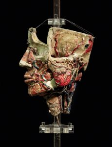 19th c. Detachable anatomical head model in paper-mâché