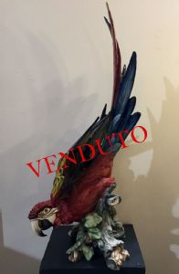 大瓷鹦鹉,Tay,Giuseppe Tagliariol