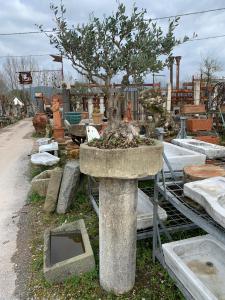 Colonna in pietra con vaso e bonsai