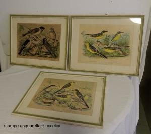 stampe acquarellate con uccelli cm 35 x 25