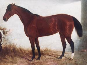 """Edwin Brown de Coventry (British Mancetter 1814 - 1891) """"Pura sangre en establo"""""""
