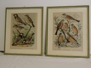 stampe acquarellate con uccelli cm 39 x 31