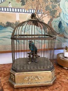 带鸟的音乐笼