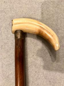 Bastone con pomolo in dente di facocero.Canna in bambu'.