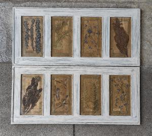 Par de herbários emoldurados