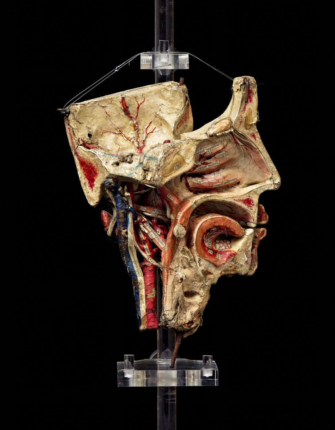 thumb2|19th c. Detachable anatomical  head model  in paper-mâché